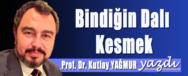 PROF DR KUTLAY YAGMUR BINDIGIN DALI KESMEK